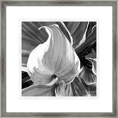 Shape Framed Print by Susan Wood