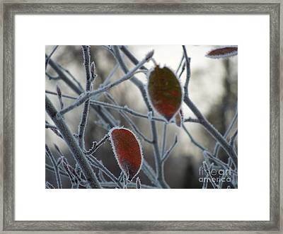 Shards Of Frost Framed Print by Linda Seacord