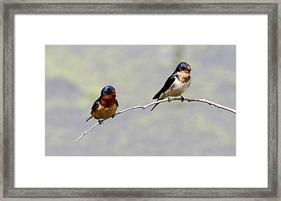 Framed Print featuring the photograph Sharing A Branch by Elizabeth Winter