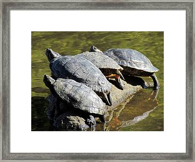 Sharing A Rock Framed Print by Eva Kondzialkiewicz