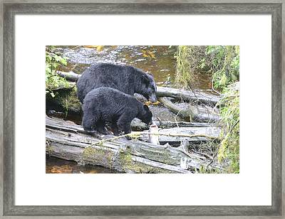 Sharing Lunch Framed Print