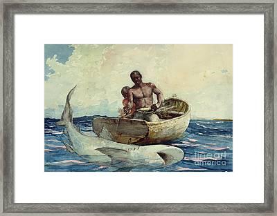 Shark Fishing Framed Print