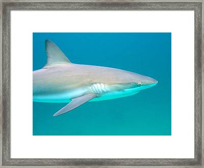 Shark Profile Framed Print by Ted Papoulas