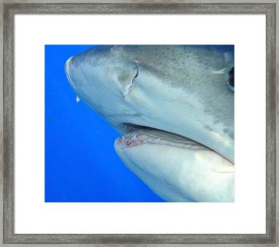 Shark Up Close And Personal Framed Print