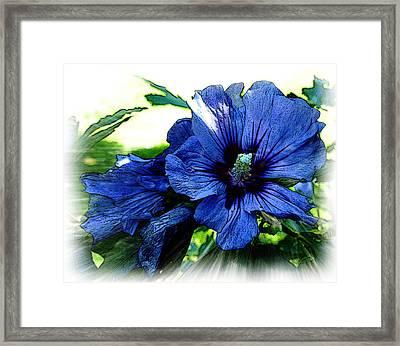 Sharon's Rose Framed Print by Yvonne Scott