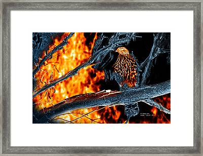 Sharp Shinned Hawk 0112 Fire And Ice Art Framed Print