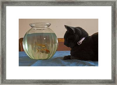 Framed Print featuring the photograph Shastacat by Darleen Stry