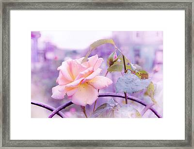She Like The Ghost Beside Me. Scottish Rose Framed Print by Jenny Rainbow