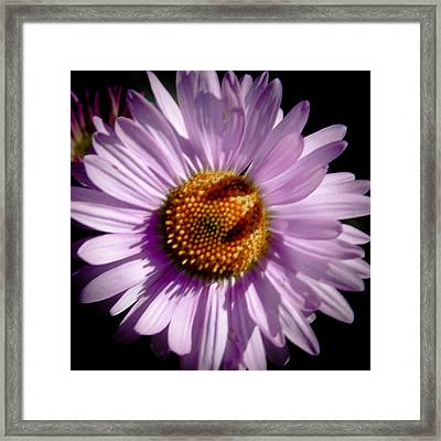 She Loves Me Framed Print by David Patterson