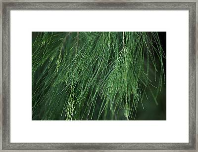 Framed Print featuring the photograph She Oak by Carole Hinding