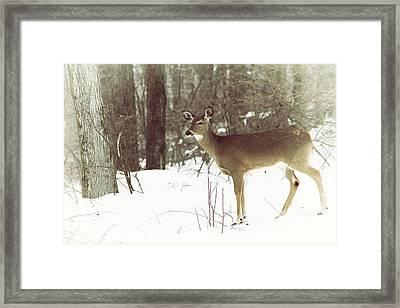 She Sees You Framed Print by Karol Livote