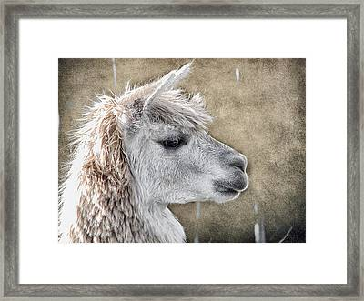 She Walks In Beauty Framed Print