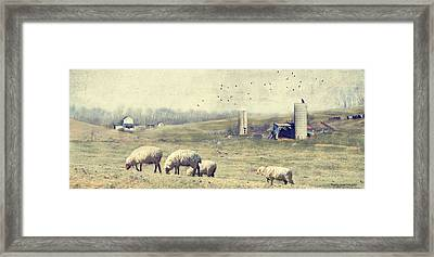 Sheep Farm Framed Print by Kathy Jennings