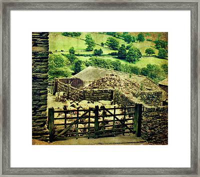 Sheep Gate Framed Print by Linde Townsend