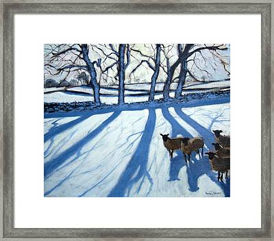 Sheep In Snow Framed Print by Andrew Macara