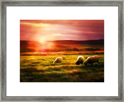 Sheep In Sunset Framed Print by Suni Roveto