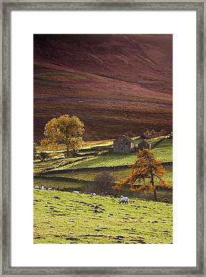 Sheep On A Hill, North Yorkshire Framed Print by John Short
