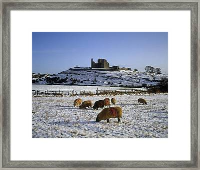 Sheep On A Snow Covered Landscape In Framed Print
