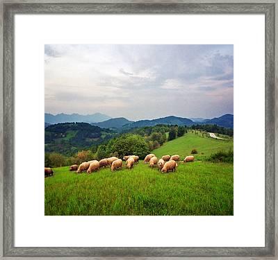Sheep On Meadow Framed Print by Katarina Stefanovic