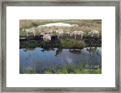 Framed Print featuring the photograph Sheep by Vilas Malankar