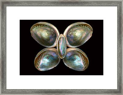Shell - Conchology - Devine Pearlescence Framed Print by Mike Savad