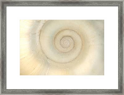 Shell - Conchology - White Spiral Framed Print