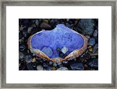 Shell Dish Framed Print by Anna Bree