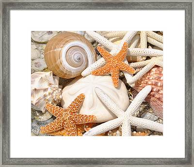Shellebration Framed Print