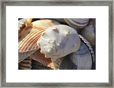 Shells 2 Framed Print by Mike McGlothlen