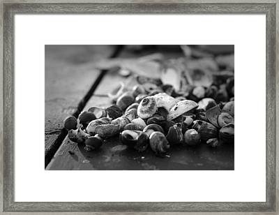 Shells Framed Print by Eric Gendron