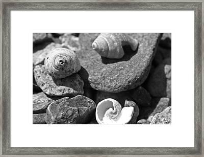 Shells I Framed Print by David Rucker