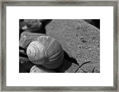 Shells II Framed Print by David Rucker