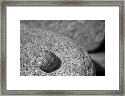 Shells IIi Framed Print by David Rucker