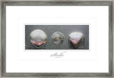 Shells Framed Print by J R Baldini
