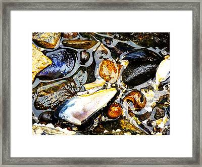 Framed Print featuring the photograph Shells by Kelly Reber