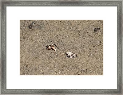 Shells On A Beach Framed Print by Rebecca Frank