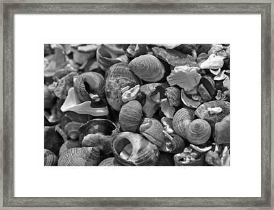 Shells V Framed Print by David Rucker