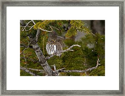 Shelter From The Storm Framed Print by Sandy Sisti
