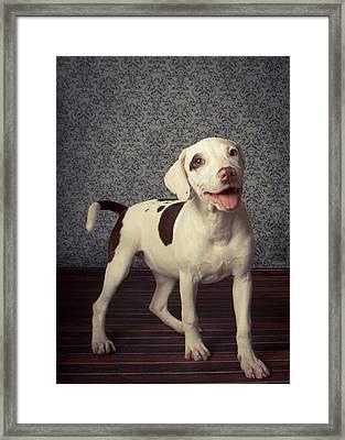 Shelter Puppy Framed Print