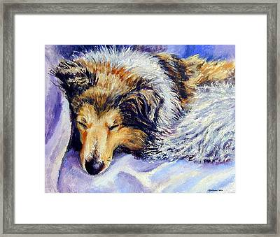 Sheltie Napster Framed Print by Lyn Cook