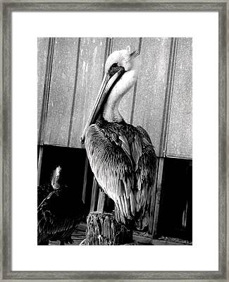 Framed Print featuring the photograph Shem Creek Pelican by Lyn Calahorrano