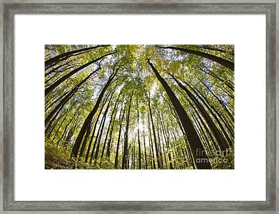 Shenandoah National Forest Va Framed Print by Dustin K Ryan