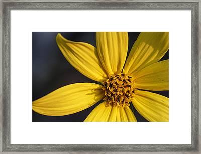 Shenandoah Sunflower Framed Print by Rick Berk