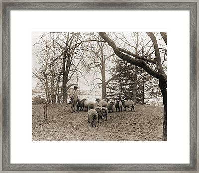 Shepherd With The White House Sheep Framed Print by Everett