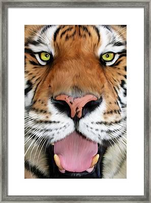 Sherekhan Framed Print by Big Cat Rescue