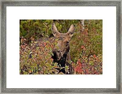 She's Got The Look   Framed Print by Eric  Nelson