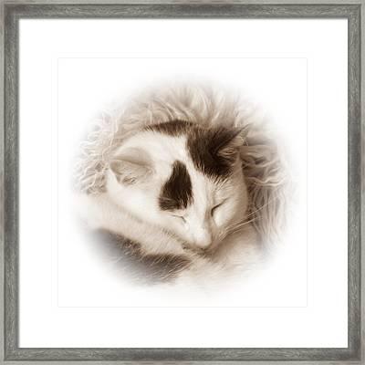 Shhh Framed Print by Sharon Lisa Clarke