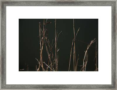 Shhhhhh Framed Print by Ed Smith