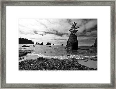 Shi Shi Beach Framed Print