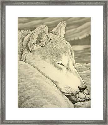 Shiba Inu Framed Print by Kim Hunter